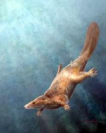 Юрский бобер-химера Repenomamus giganticus. Иллюстрация: Mark A. Klinger/CMNH с сайта New Scientist