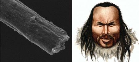 Слева - фотография волоса Инука, полученная с помощью  электронного микроскопа, справа: так Инук мог выглядеть в жизни, 4000  лет назад. Изображение с сайта www.wired.com