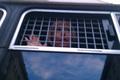 Задержанная участница прогулки в день 50-летия МБХ. Фото Ники Максимюк/Грани.Ру